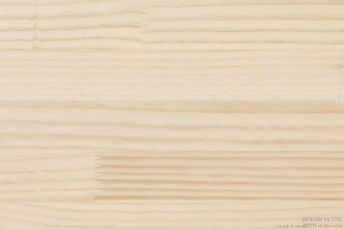 소나무(칠레산)topfinger-4.jpg